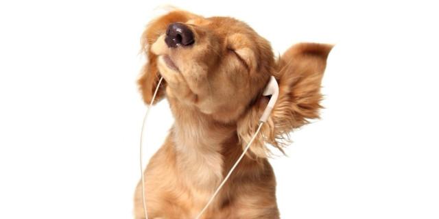 listen-dog-800