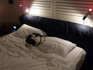 dodger_bed-thumb-300x225.jpg